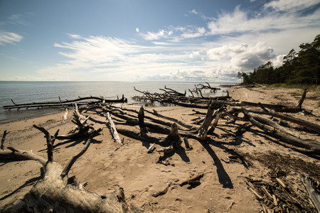 beach skyline with old tree trunks in water and blue sky