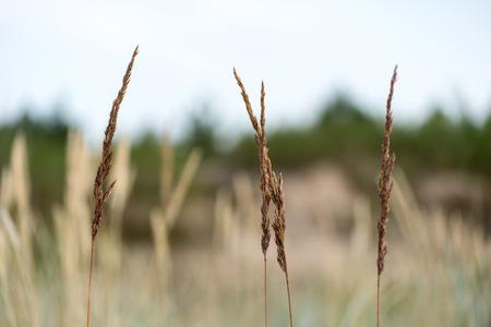few bents on blurred background Reklamní fotografie