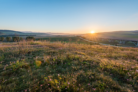 sunny meadow with flowers and green grass in summer at sunrise