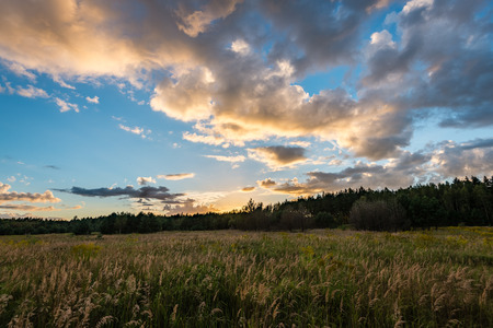 sunny meadow with flowers and green grass in summer at sunset Stock Photo