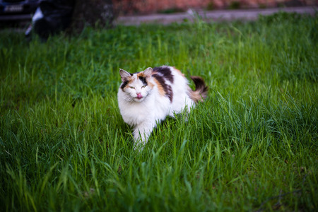 chordates: single suspicious cat playing in natural envirionment