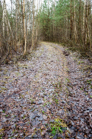 unsurfaced road: country road in forest with autumn trees and dead leaves