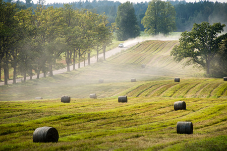 autumn field in bright day in countryside with rolls of hay