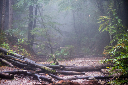colorful autumn trees in heavy mist in wet forest after rain. scenic trail