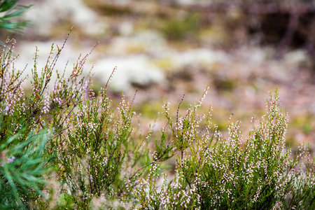 white moss on green background in wet forest Stock Photo
