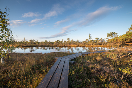 wooden footpath on the bog with autumn colored flora Stock Photo