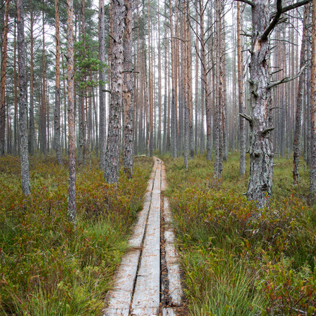 wooden footbridge in the bog in the countryside Stock Photo