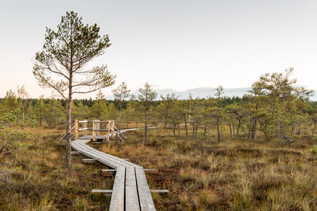 bog: wooden footpath on the bog with autumn colored flora Stock Photo