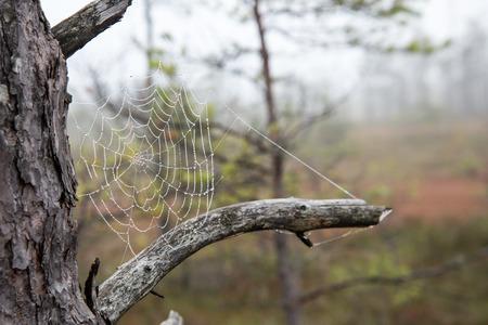 gotas de agua: La tela de araña (araña) del fondo del primer