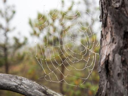The spider web (cobweb) closeup background
