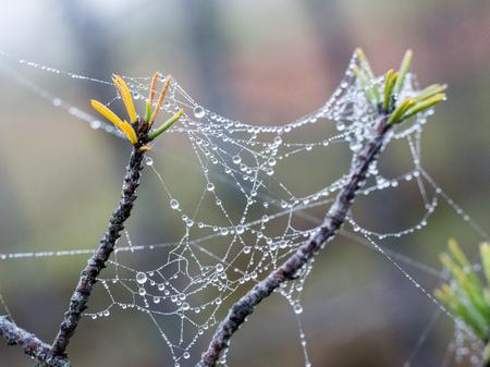 ploy: The spider web (cobweb) closeup background