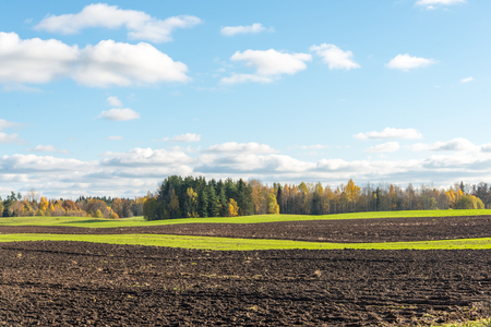 arboles frondosos: green field with trees in the autumn in country