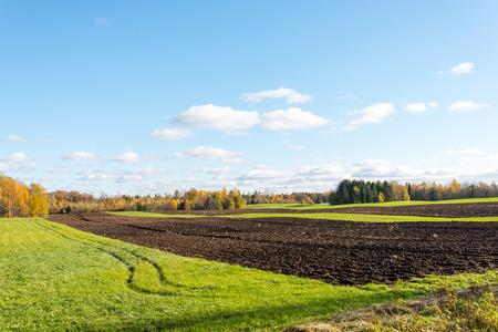 arboles frondosos: campo verde con árboles en el otoño en el país