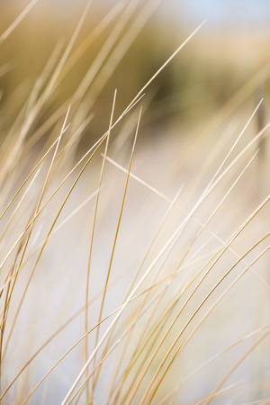 beautiful blur dry grass and bent background