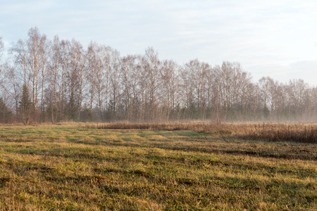 beautiful misty meadow in the morning frost in country Stock Photo