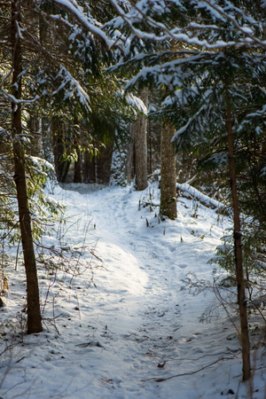 snowy winter forest with snow covered trees in country Stock Photo
