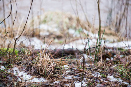 dirty wet leaves in the snow. background texture Stock Photo