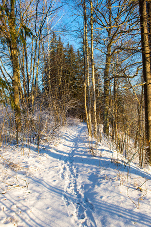 snowy winter landscape with snow covered trees and blue sky