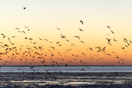 birds flying in sunset over frozen sea with ice blocks and dramatic colorful sky