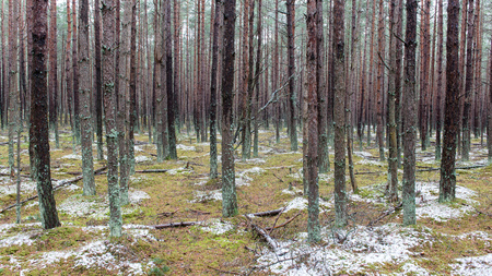 trail in the pine tree forest in winter with frost and snow Stock Photo