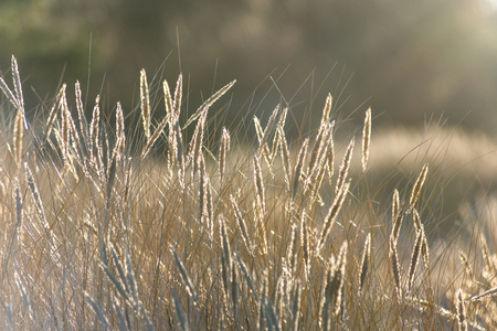 beautiful abstract grass texture on sunset with reflections and rays of sun