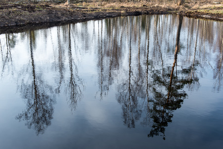 reflective: reflections of trees in blue pond water. spring in country