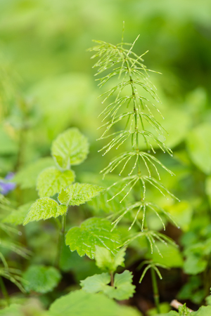 unaffected: young spring leaves on green background in wet forest