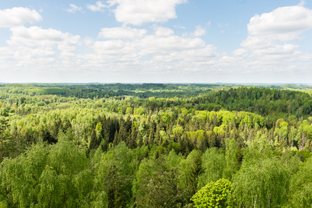 Endless forests in sunny day with perspective in color