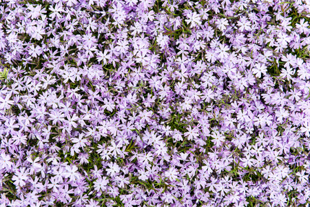 purple summer flower meadow background with green leaves
