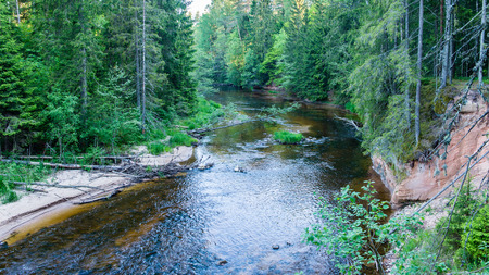 latvia: Summer river with reflections in Gauja National Park in Latvia