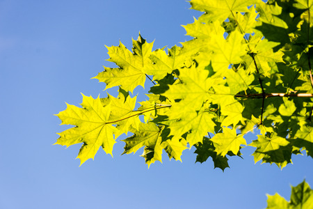green leaves on blue sky background Stock Photo