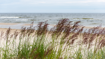 currents: waves on the shore of the Baltic sea beach