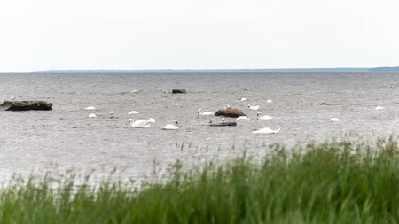 currents: Birds on the rocks in the sea at the beach in Baltic sea Stock Photo