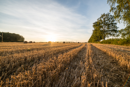 bales: Golden hay bales in countryside. Stock Photo