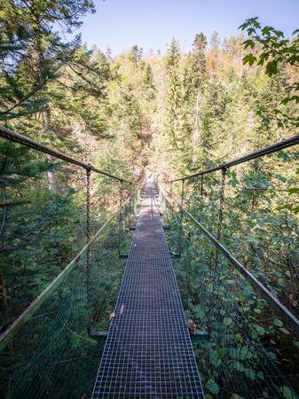resplandor: old bridge in forest seen in perspective. central composition