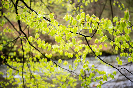 green leaves on a bed of green bush with flowers and tree branches
