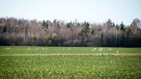 arando: Campo cultivado en el brillante día de primavera en el campo