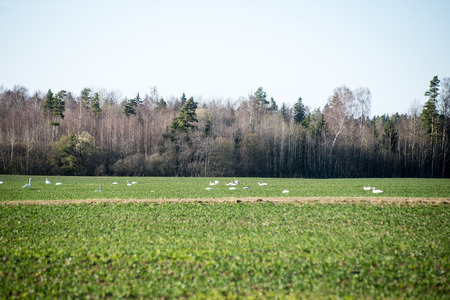 Cultivated field in bright spring day in countryside