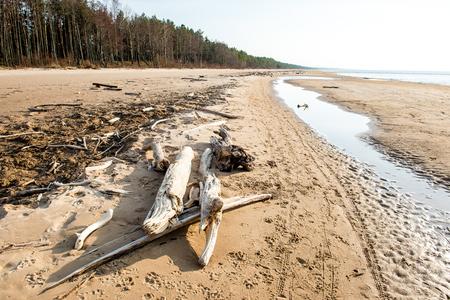 Log on the beach of Baltic sea (Selective focus) Stock Photo