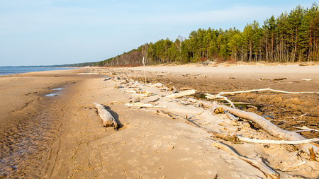 Log on the beach of Baltic sea (Selective focus) Stock Photo