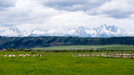 Dark storm clouds over meadow with green grass and mountains in background Stock Photo