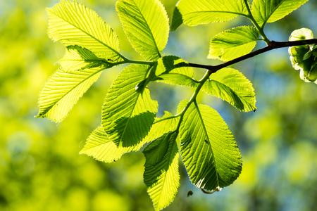 green leaves on a blue sky with tree branches Stock Photo