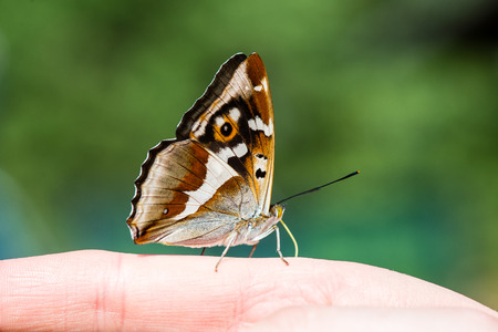 beautiful butterfly resting on the hand in summer