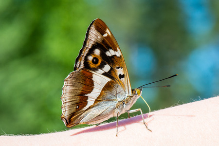 io: beautiful butterfly resting on the hand in summer