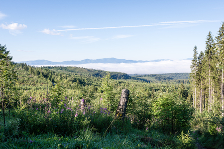 tarn: Misty morning mountain view with peaks in mist and forest trees in Slovakia