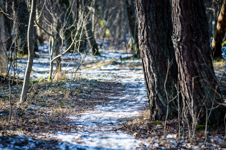 cold winter park in sunny weather with snow covered tree trunks Stock Photo