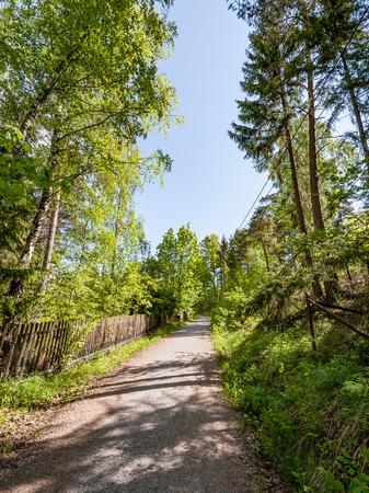 country road in perspective in summer forest with trees and grass