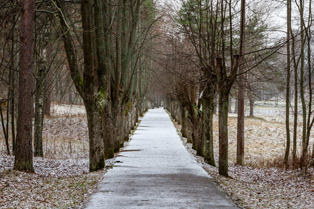 country road in perspective in winter forest with trees and grass