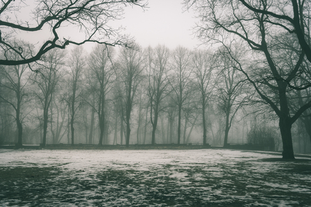 cold winter park in mist with snow covered tree trunks