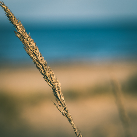 beautiful blur dry grass and bent background - instant vintage square photo Stock Photo